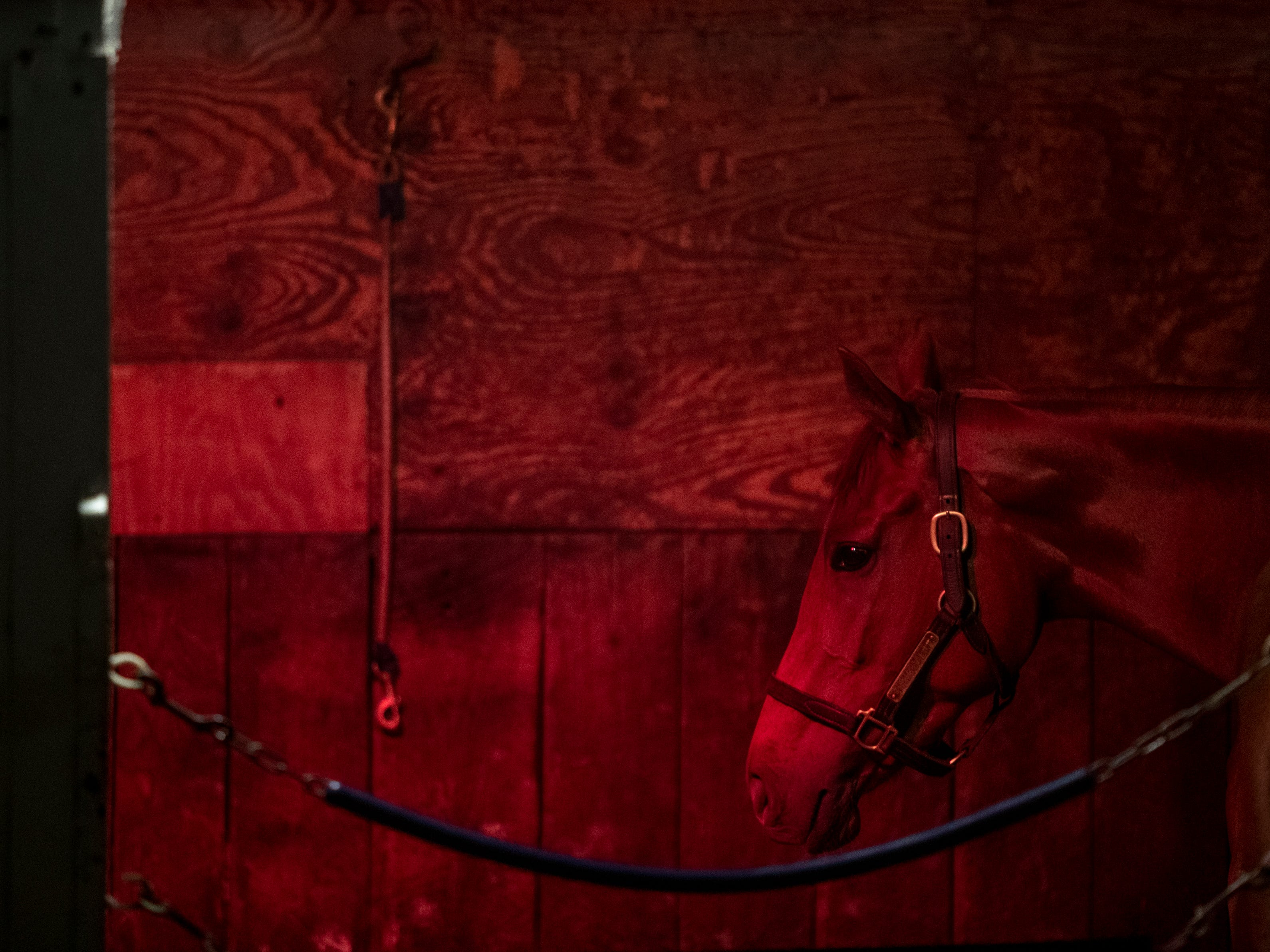 A heat lamp keeps a horse warm in its stall in the Bernie Flint stable at Churchill Downs. April 24, 2019