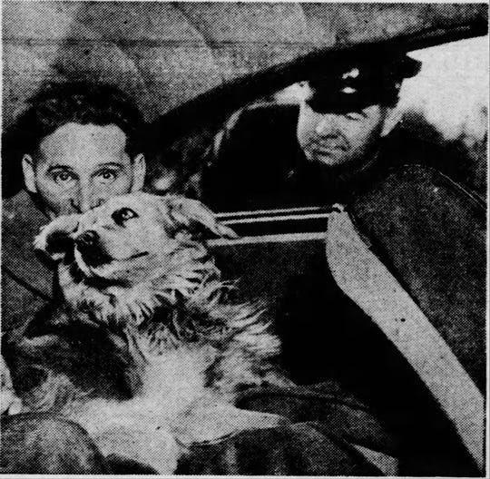 """Tippy, described in a 1946 Democrat and Chronicle article as a """"brown mongrel dog,"""" was taken with his owner to jail on disorderly conduct charges. His owner, Charles Teeter, was one of more than 400 people arrested for protesting the firing of city workers who were trying to form a labor union."""