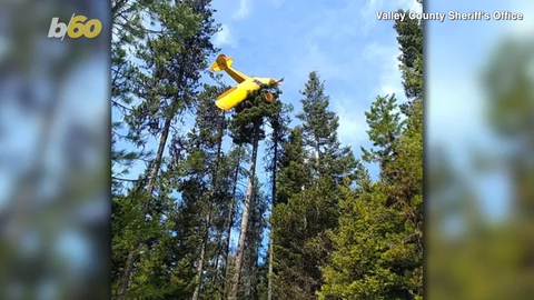 Idaho rescuers save pilot who crash-lands on top of 60-foot tree