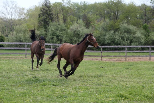(front) Livin Large, 13, and Jazz Man, 6, both retired thoroughbreds rescued by Second Call, a thoroughbred adoption and rescue organization that helps find homes for retired Monmouth Park race horses, run together at Hill Haven Farm in Millstone Twp., NJ Thursday, April 25, 2019.