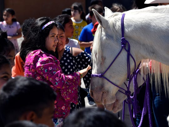Ortiz Elementary School second-graders Ruby Torres (in purple) and Joanna Buena pet one of the Six White Horses from Hardin-Simmons University's famed equestrian team. Western Heritage Day invited local school children to experience some of the trappings of pioneer life through games and learning activities.