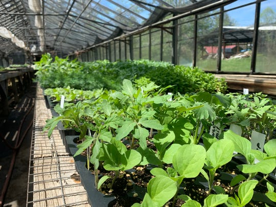 """The fifth annual """"Great Plant Giveaway"""" will take place Saturday morning in the parking lot of St. Mark's Lutheran Church in North Asheville. About 1,650 plants will be given away."""