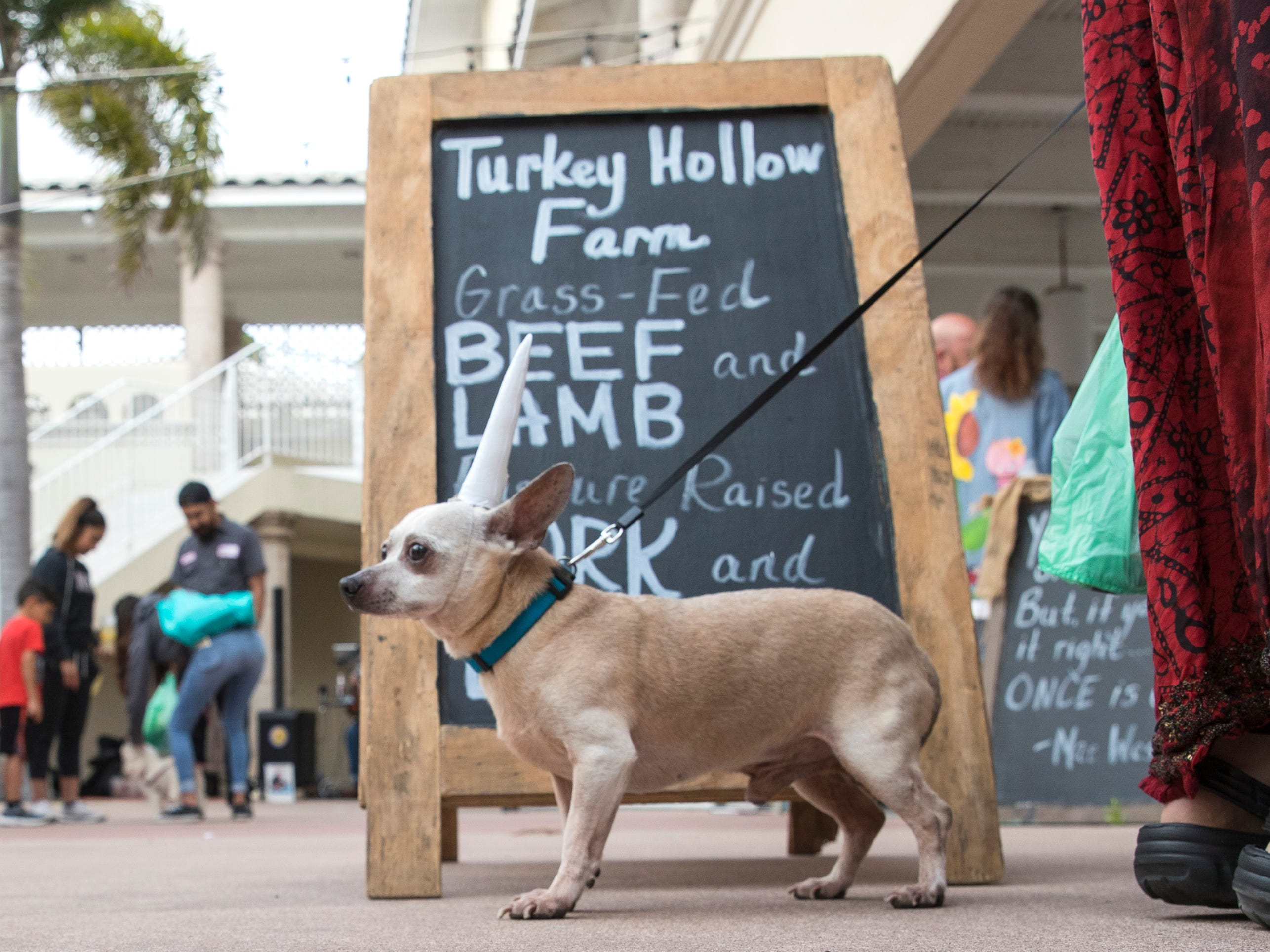 Fry visits the Corpus Christi Downtown Farmers Market on Wednesday, April 24, 2019. The market is pet-friendly and offers a variety of seasonal produce. It is open weekly on Wednesday from 5 to 8 pm at 100 N. Shoreline Blvd.
