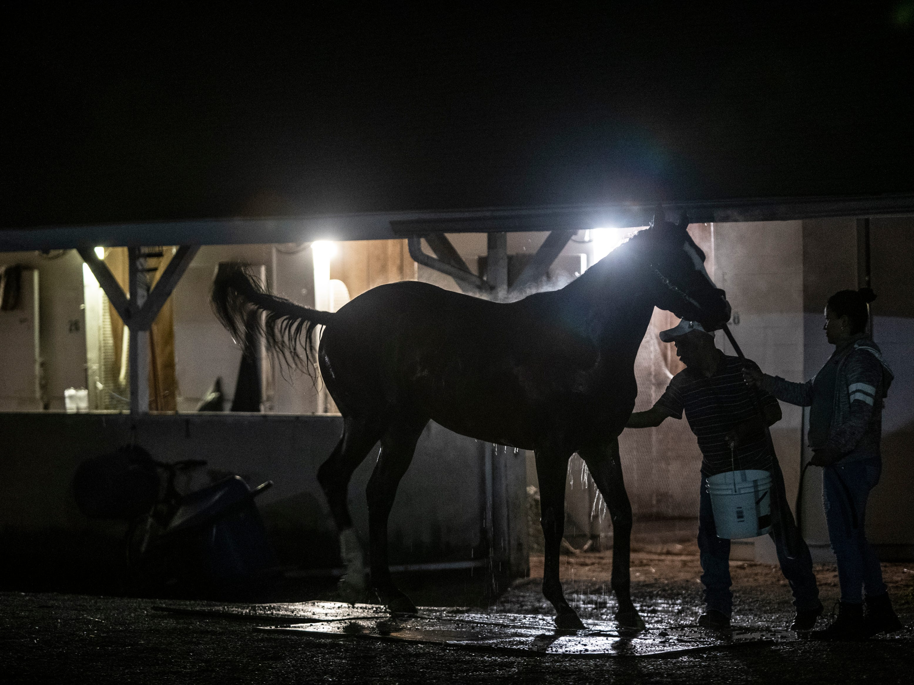 A horse is bathed following a pre-dawn workout at Churchill Downs. April 25, 2019.