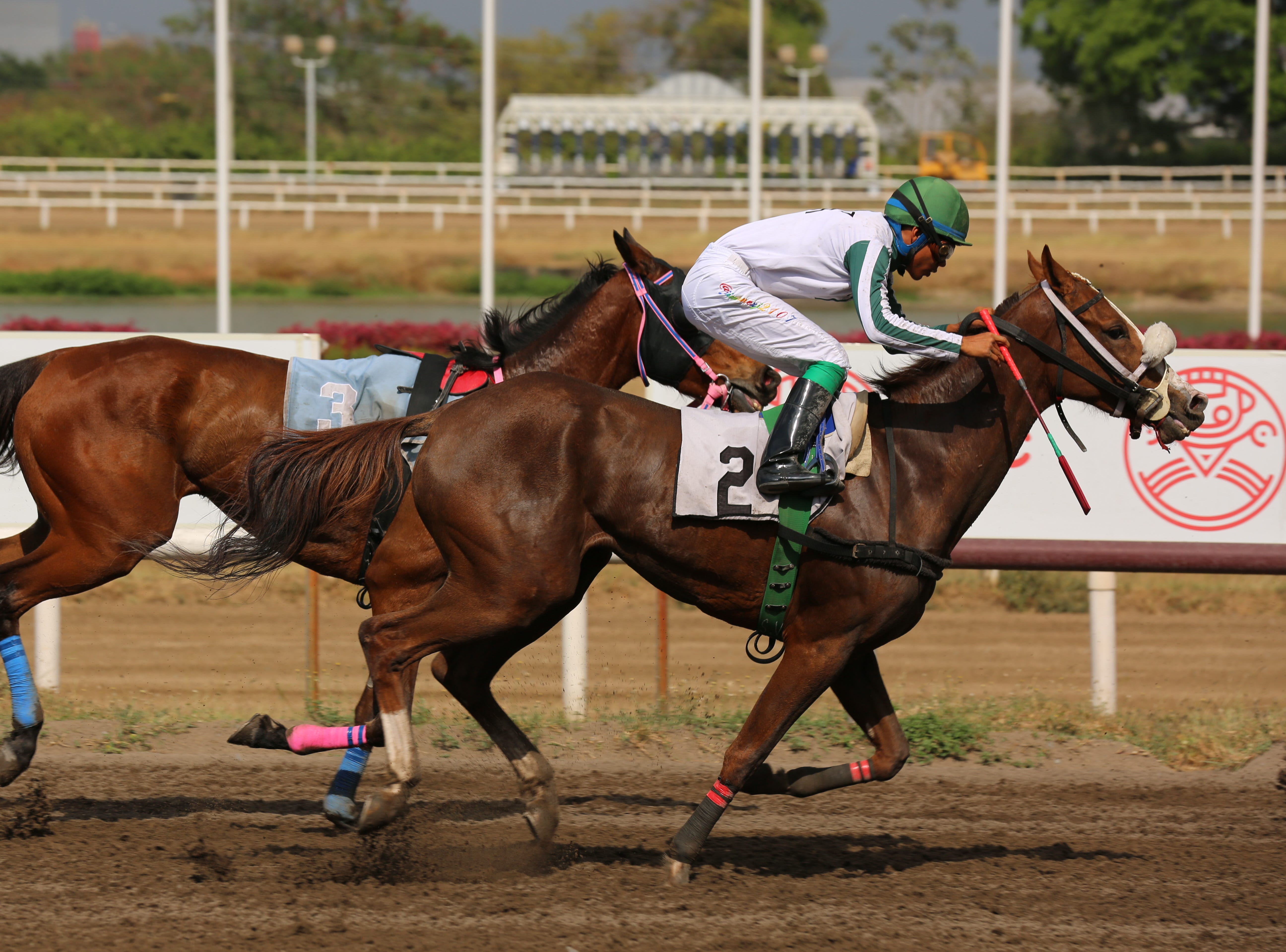 In Panama, 'Cradle of the best jockeys in the world,' the famed Laffit Pincay Jr. Technical Jockey Training Academy has trained top thoroughbred riders for decades.