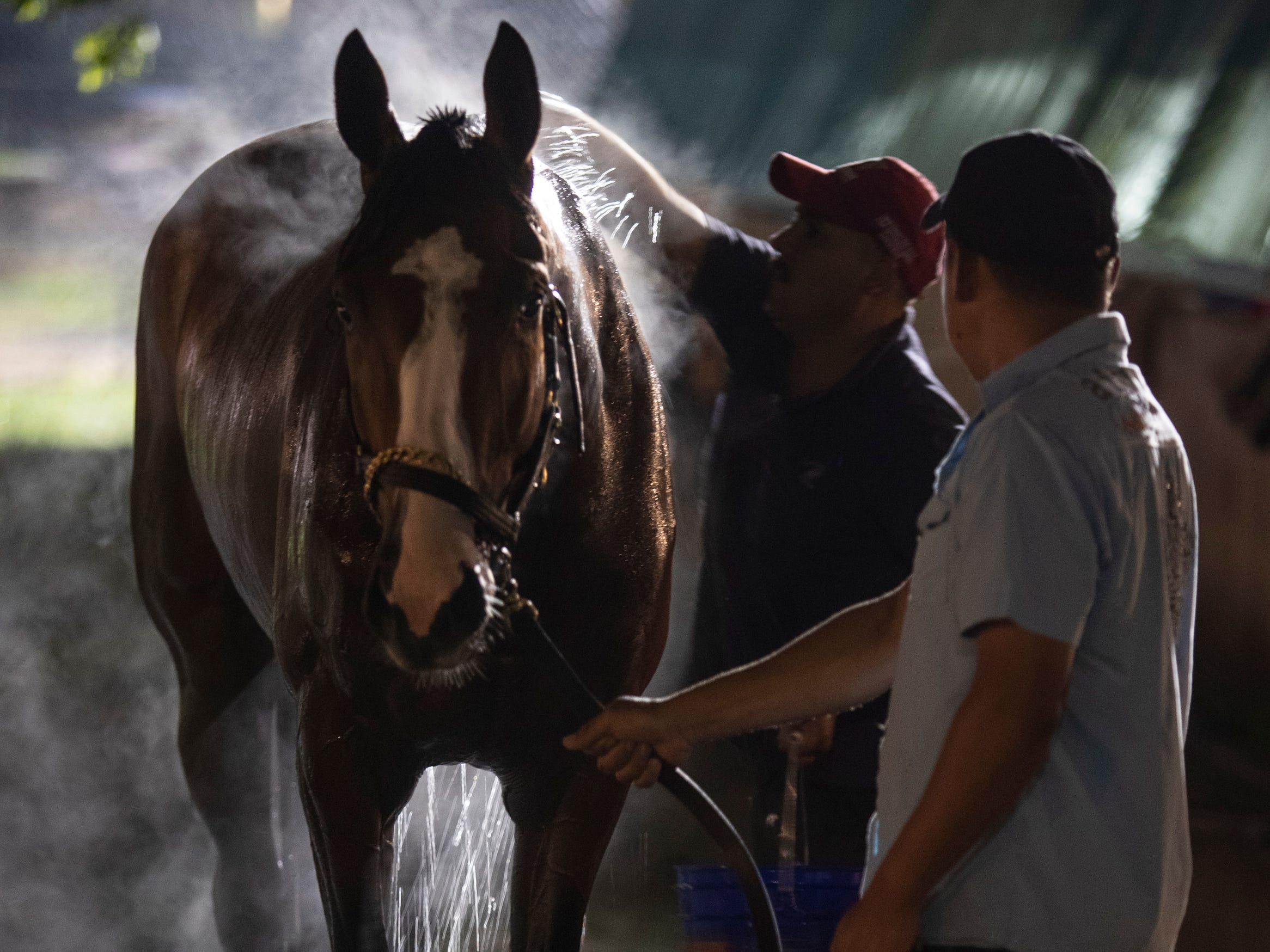 A horse is bathed in the pre-dawn hours on the backside of Churchill downs. April 25, 2019.