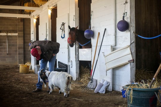 Steve Hobby, horse trainer, talks to Lily the calming goat as she wanders around her barn on the backside of Churchill Downs in Louisville, Ky., on April 24.