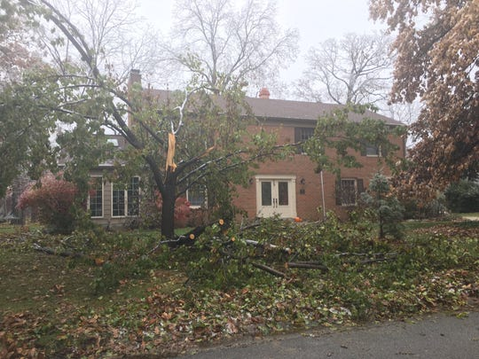 A pear tree in Muncie after being cracked open by a storm.