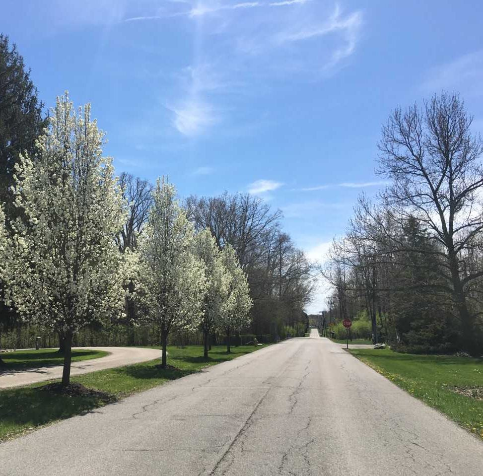 City of Muncie busy with invasive bug, no time for invasive tree