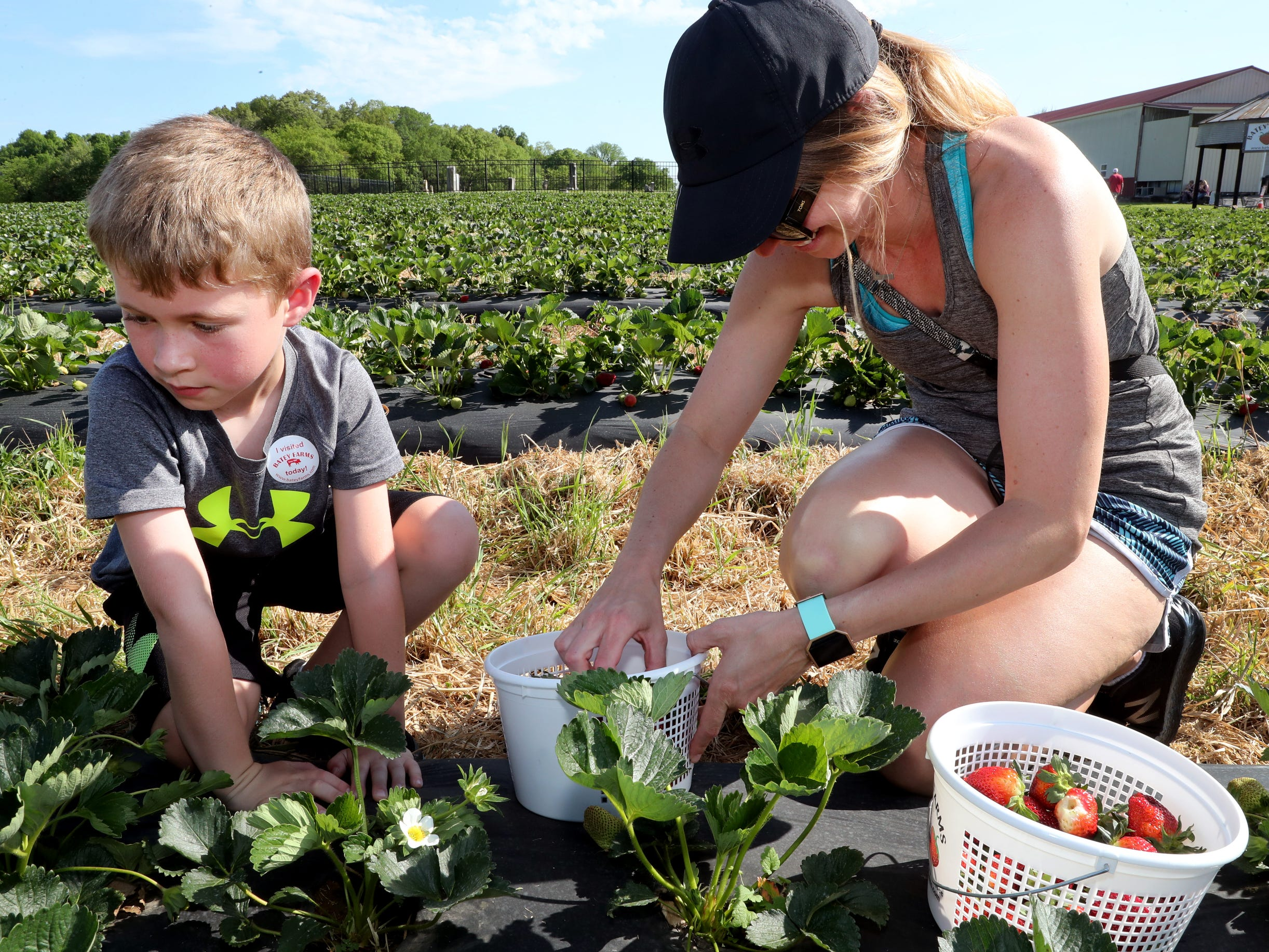 Hudson Billington, 7 and his mom Lynne Billington pick strawberries on Wednesday April 24, 2019, at Batey Farms in Murfreesboro.