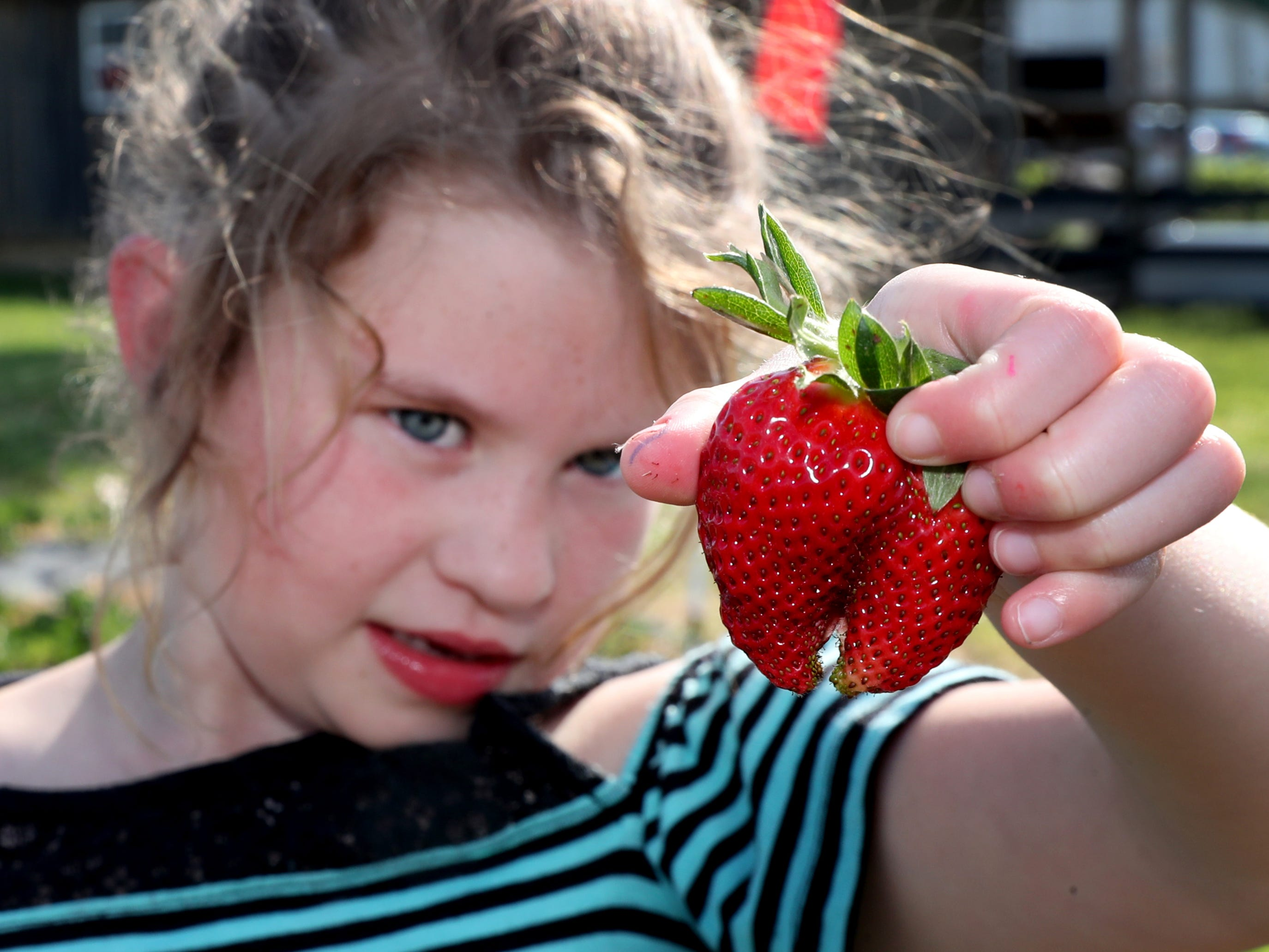 Ada Trotter, 7, shows off a double strawberry she pick at the Batey Farms strawberry patch off of Baker Road on Wednesday April 24, 2019, in Murfreesboro.