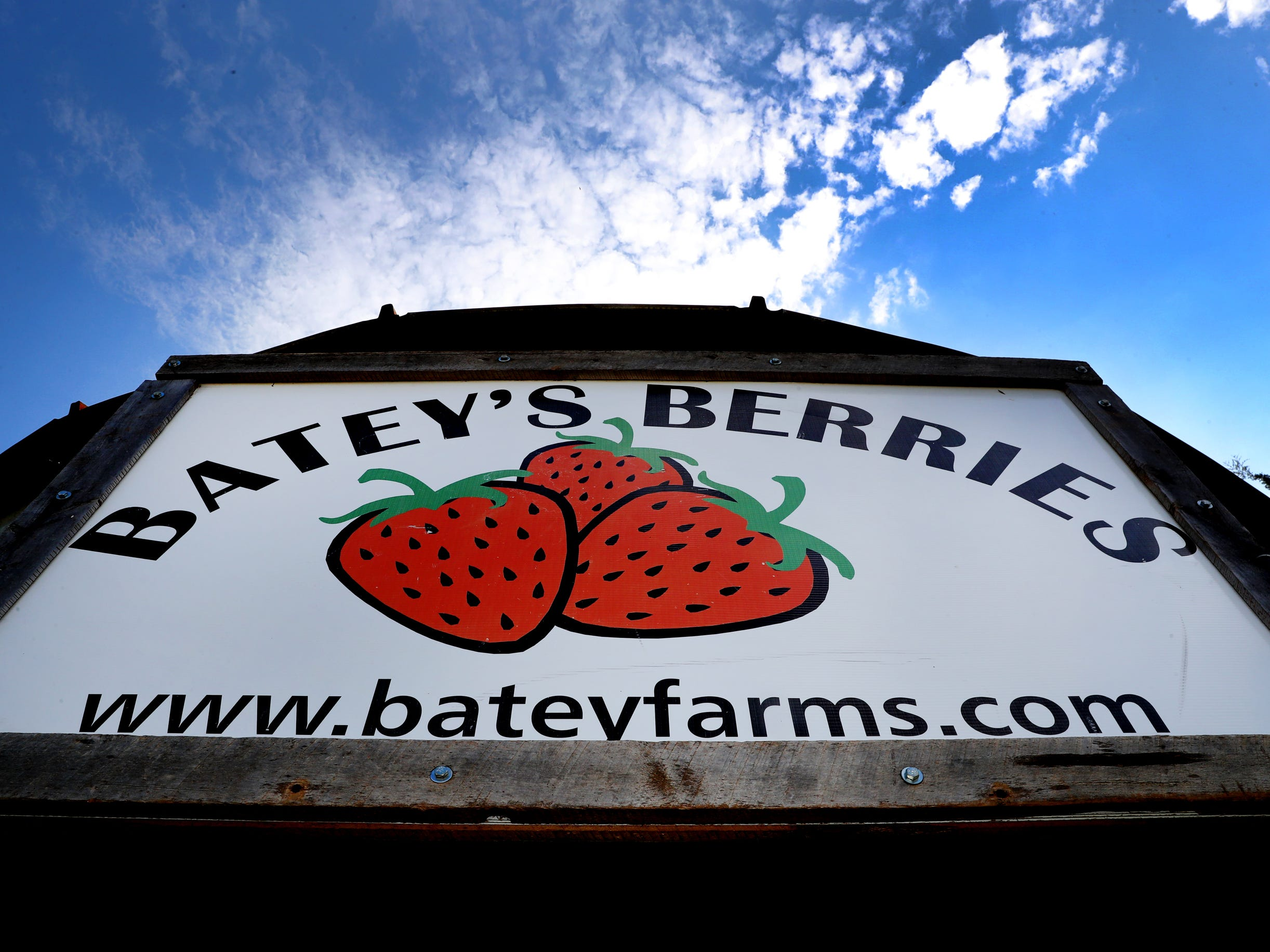 Batey Farms opened their strawberry patch on Tuesday April 23, 2019, at the 5331 Baker Road location in the Blackman area for the opportunity to pick your own strawberries or buy pre picked berries without the work.