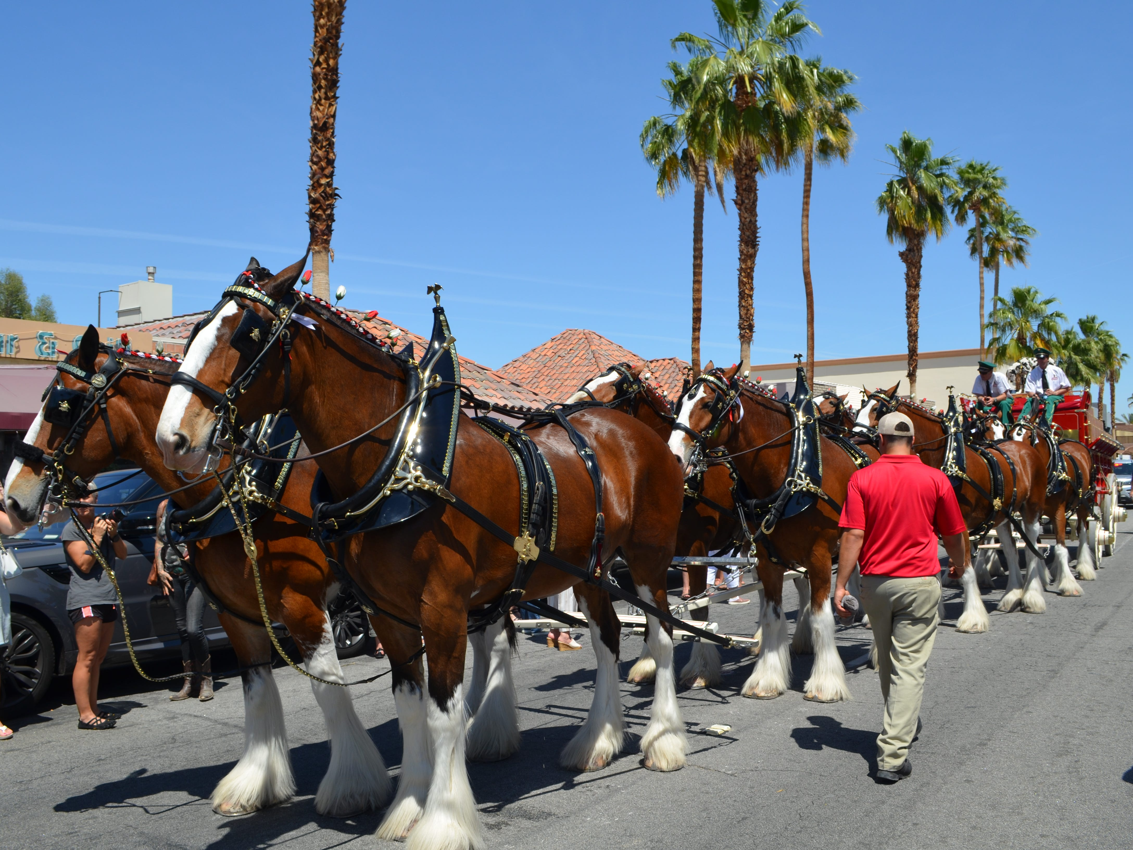The Budweiser Clydesdales pause along El Paseo in Palm Desert, Calif., April 25, 2019.