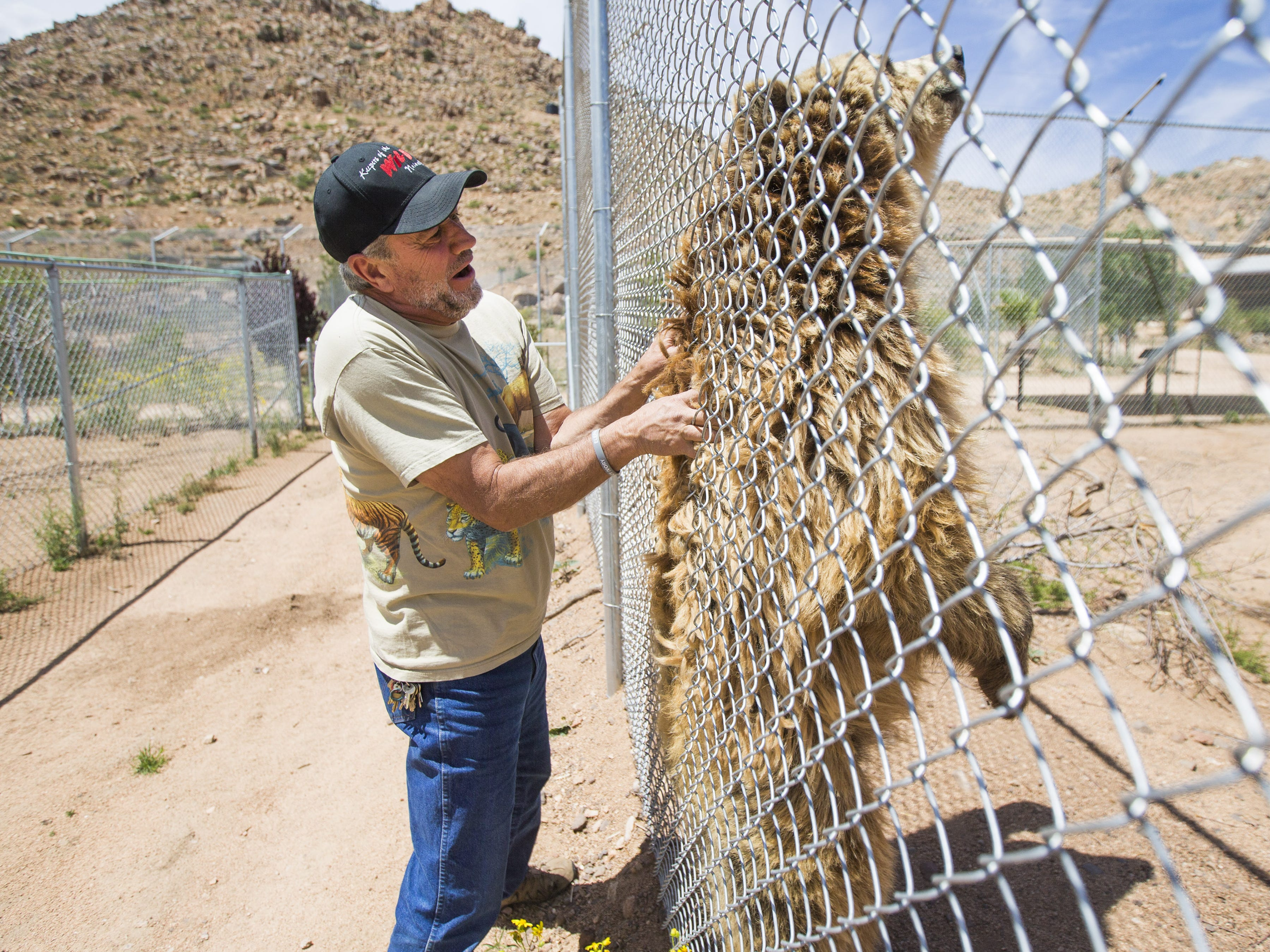 Keepers of the Wild founder Jonathan Kraft scratches Bam Bam, a grizzly bear, in Valentine, Ariz., on May 27, 2015. The nonprofit sanctuary for retired Las Vegas show tigers and other exotic animals is looking to expand north of Kingman.