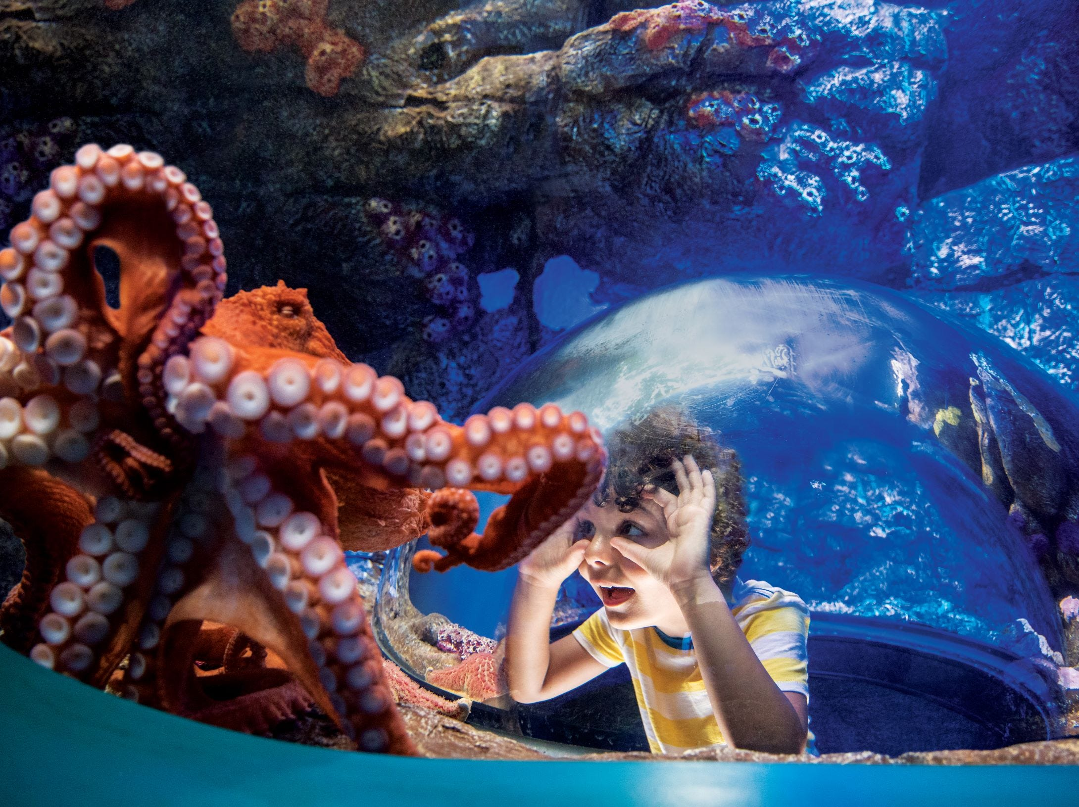 A guest gets a close look at a Pacific octopus at SeaWorld San Diego.