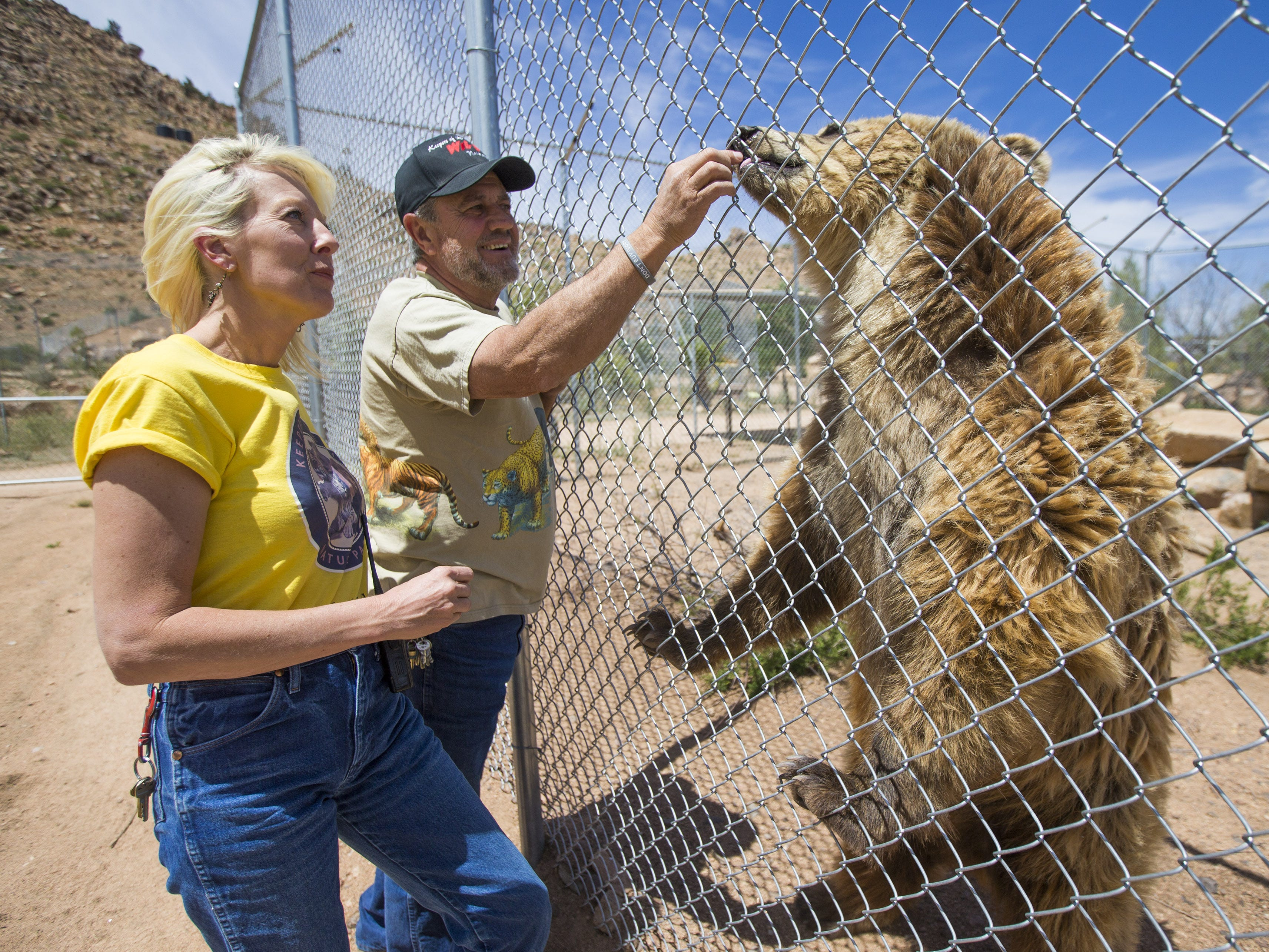 Keepers of the Wild founder Jonathan Kraft (left), with co-director Tina Matejek, is one of the promoters for a larger Wild Planet Animal Sanctuary, which aims to provide a refuge for wild creatures used in animal acts and those given up or confiscated from private owners.  Keepers of the Wild founder Jonathan Kraft and co-director Tina Matejek give a treat to Bam Bam, a grizzly bear, in Valentine, Ariz., on May 27, 2015. The nonprofit sanctuary for retired Las Vegas show tigers and other exotic animals is looking to expand north of Kingman.