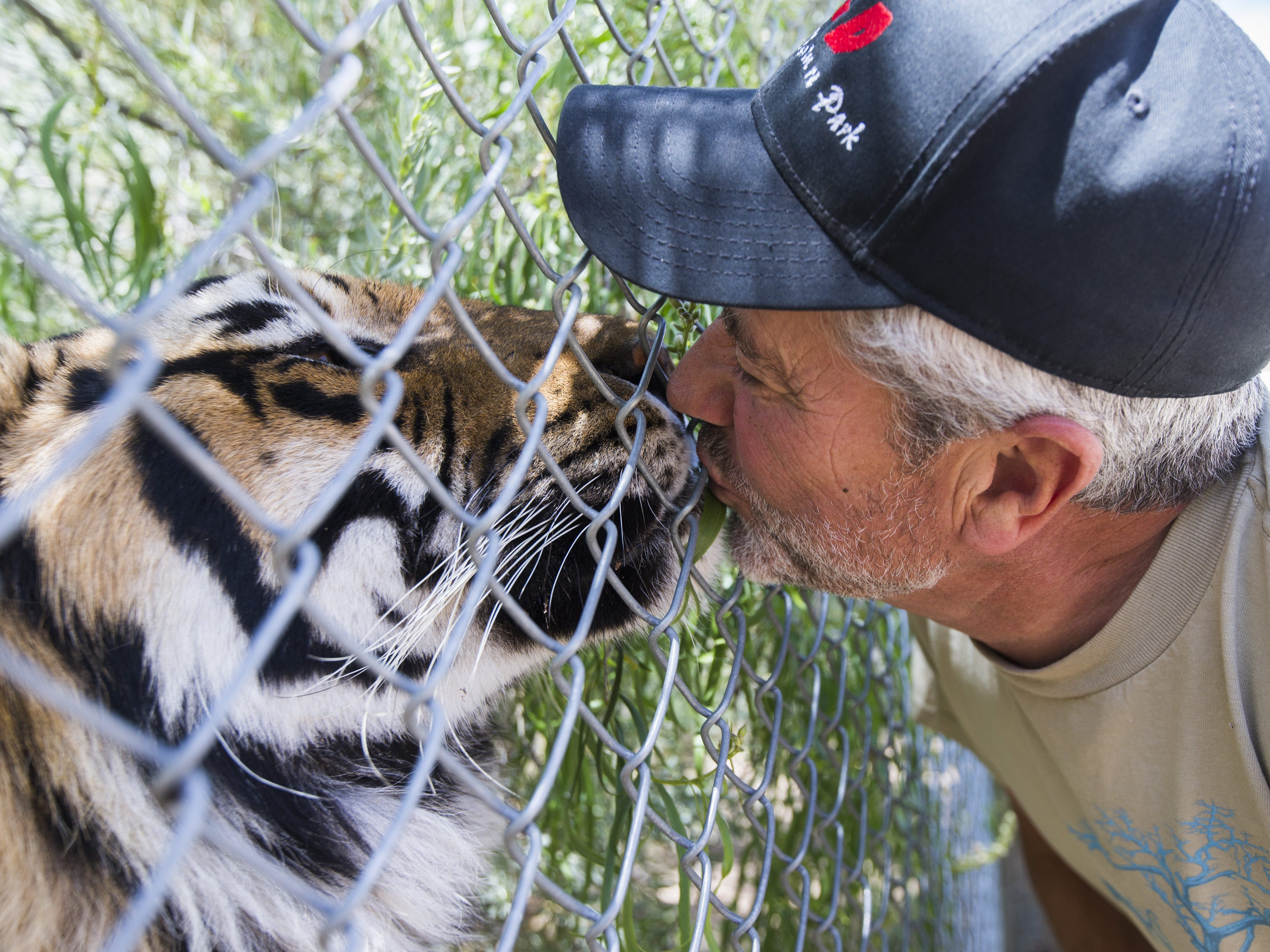 Keepers of the Wild founder Jonathan Kraft kisses Sheena, a Bengal tiger, in Valentine, Ariz., on May 27, 2015. The nonprofit sanctuary for retired Las Vegas show tigers and other exotic animals is looking to expand north of Kingman.