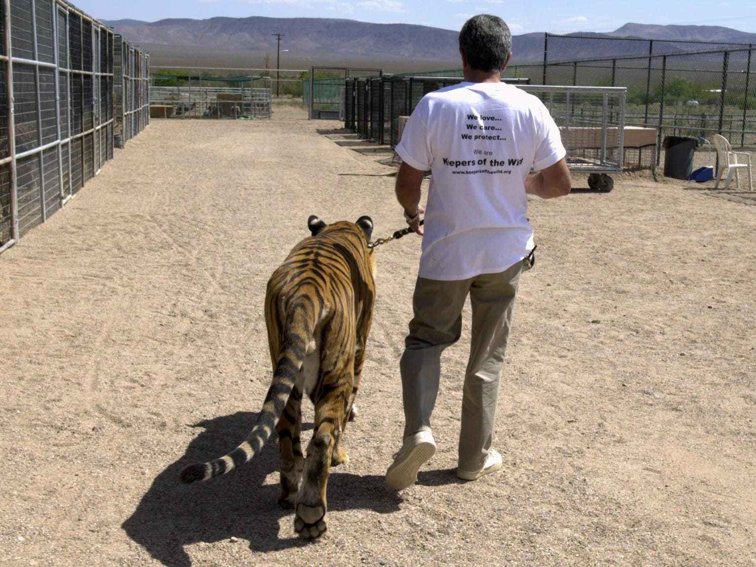 Jonathan Kraft, founder and executive director, walks a Bengal tiger at the Keepers of the Wild Exotic Animal Sanctuary on September 11, 2001.