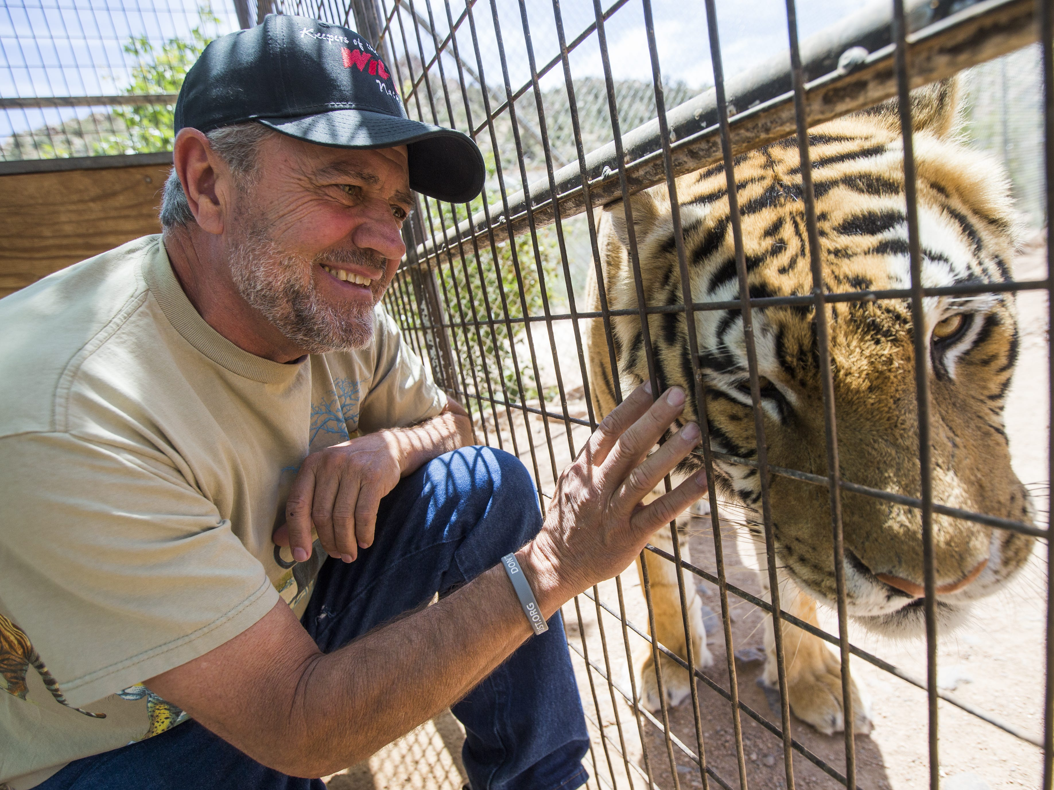 Keepers of the Wild founder Jonathan Kraft touches Moses, a Bengal tiger, in Valentine, Ariz., on May 27, 2015. The nonprofit sanctuary for retired Las Vegas show tigers and other exotic animals is looking to expand north of Kingman.