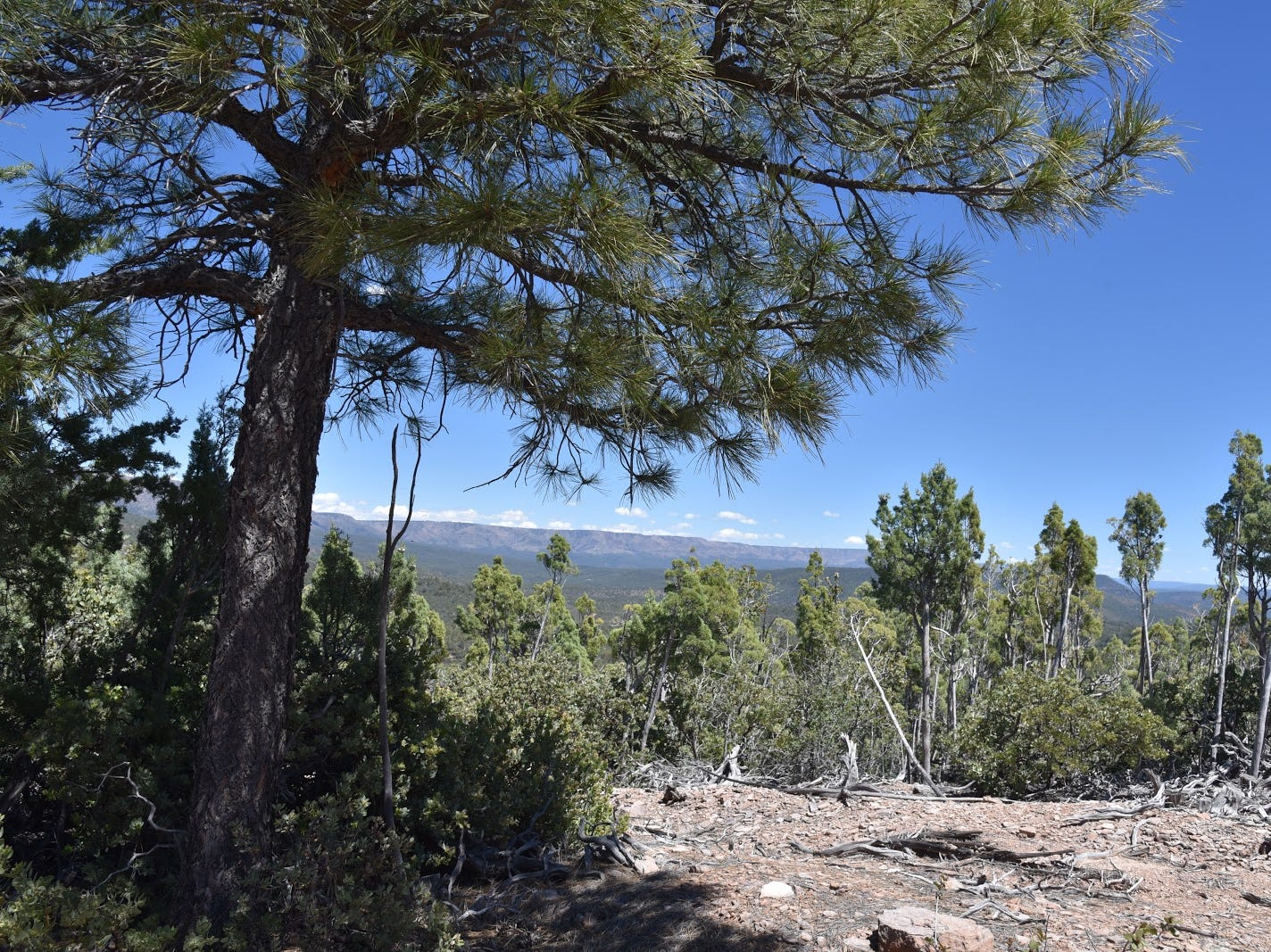 The Mogollon Rim as seen from Forest Road 322.