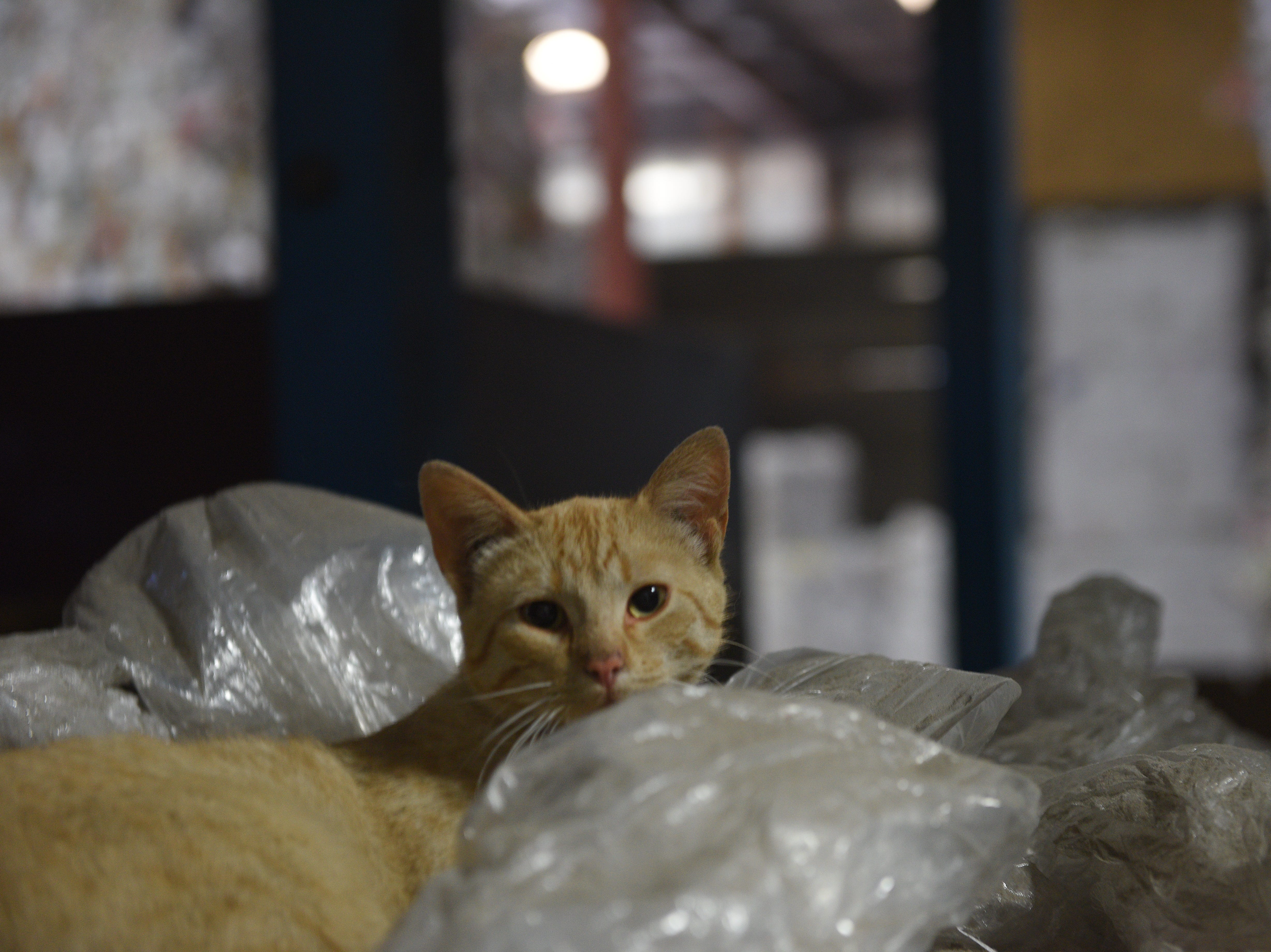 A cat lounges in a quiet corner of Millennium Recycling's northern Sioux Falls facility. Millennium is celebrating its 20th anniversary this year.