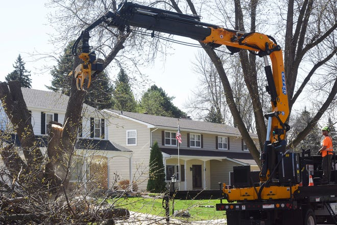 A newly-purchased truck-mounted grapple saw aids the Sioux Falls Parks and Recreation Department's forestry division in its removal of ash trees from boulevards and parks.