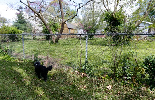 Edgrr, a poodle mix, walks near a fence that the neighbor's large dog jumped before attacking her him.