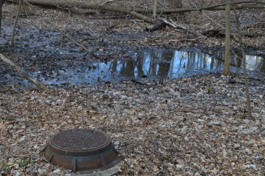 'Sheen' in Sparkill Creek's still backwaters behind Clausland Cemetery