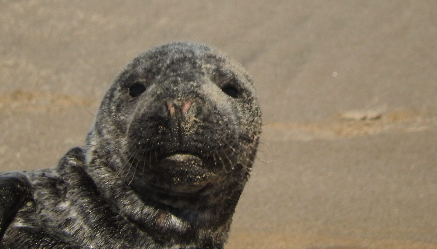 It's seal season in Delaware. What to do if you see one?