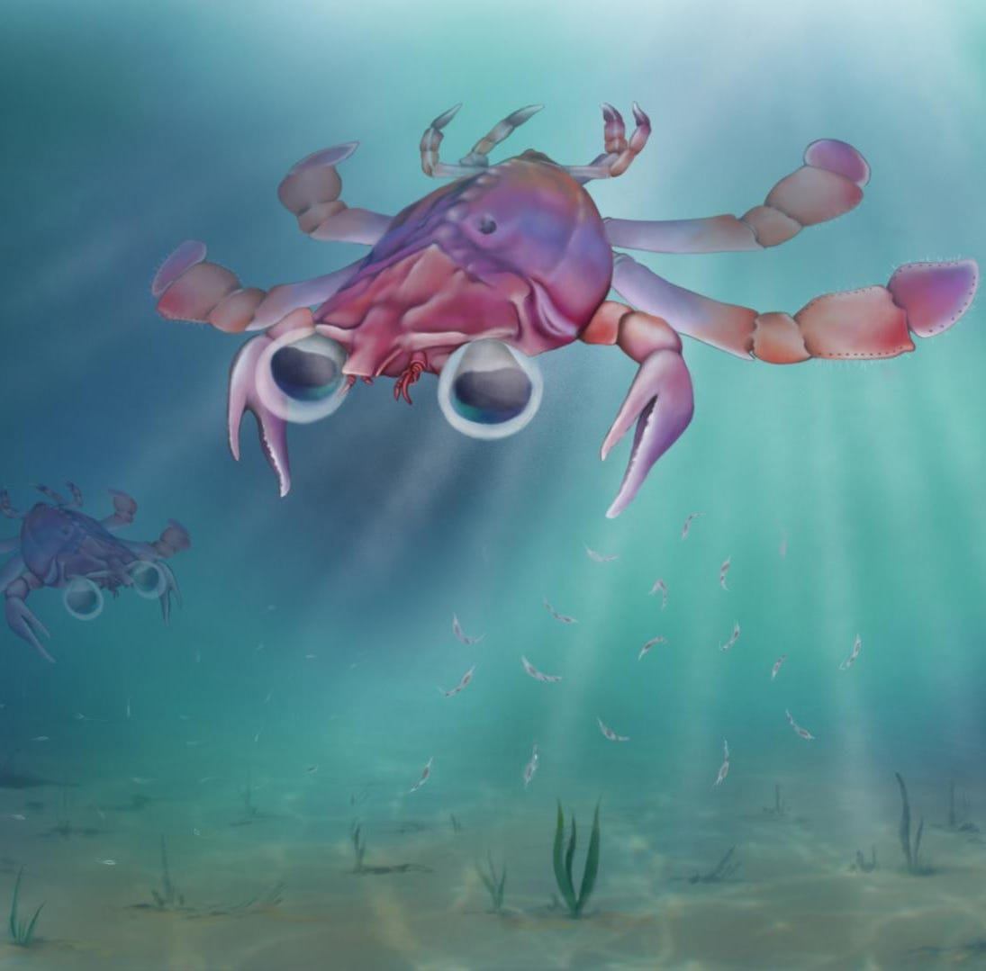 Weird prehistoric creature was 'strangest crab that ever lived,' with a 'hodgepodge of body parts'