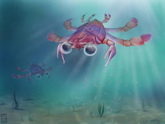 An artist's conception of a newly discovered species Callichimaera perplexa, which scientists say is the strangest crab that has ever lived.