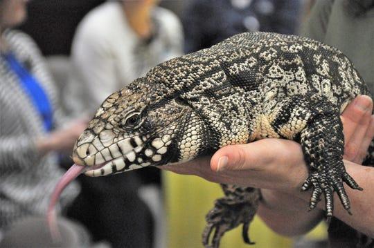 An Abilene Zoo tegu named Esmeralda was on hand for Hendrick Children's Hospital announcement.