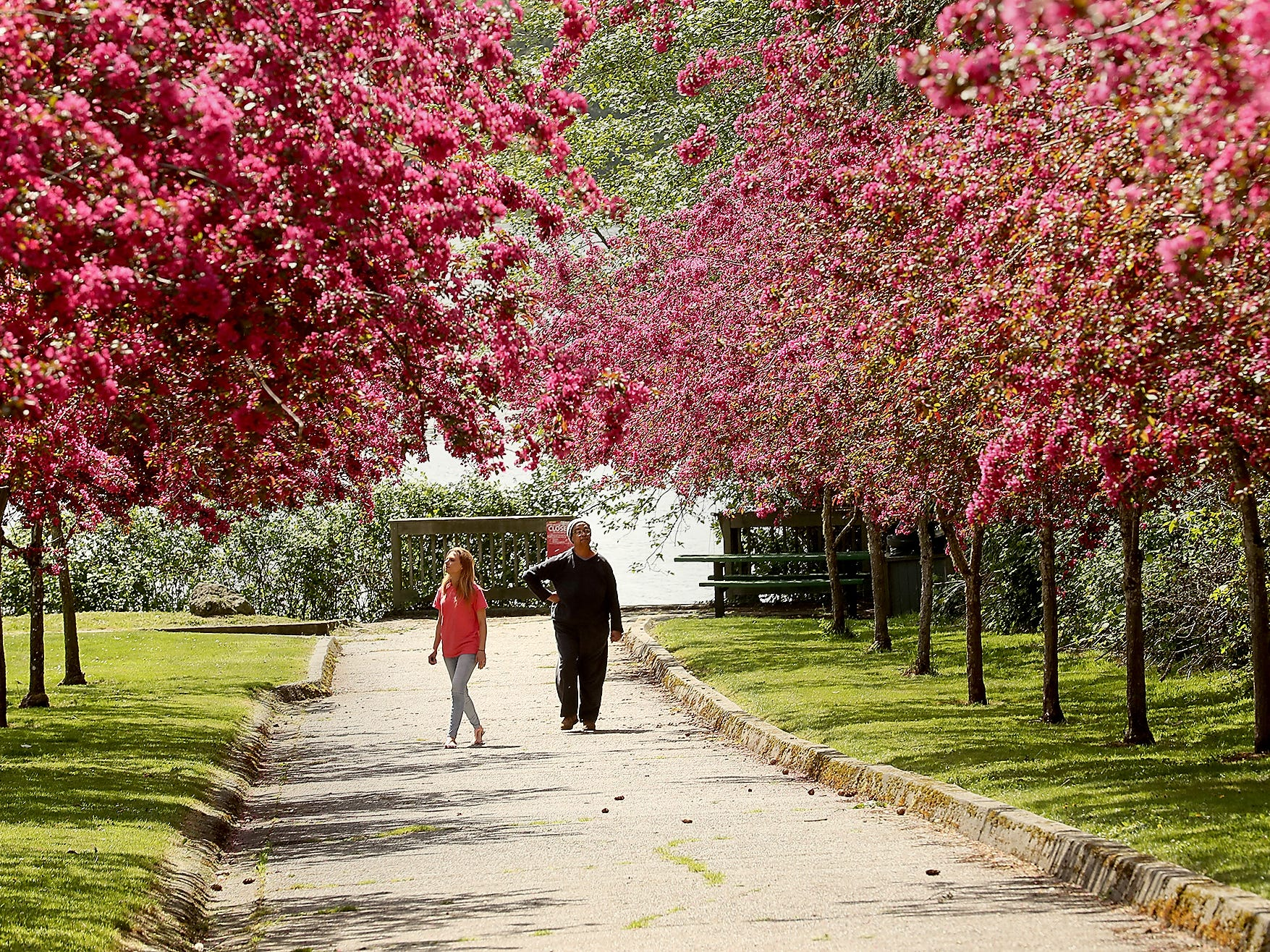 Judith Tako, left, and friend Gladys Baxter admire the blossoms as they stroll along the pathway in Bremerton's Lent Landing Park on Friday, April 26, 2019.