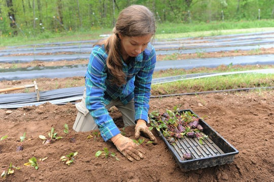 Mary Carroll Dodd, who owns Red Scout Farm with her husband Griffin, plants beets as she prepares for the return of the Black Mountain Tailgate Market on May 4.
