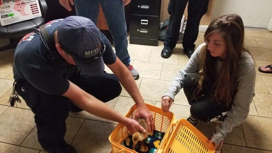 A baby sandhill crane gets checked out and taken to a wildlife sanctuary after being saved by Malabar firefighters when its parents were hit and killed by a car.