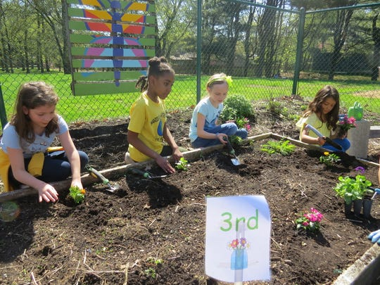 Third graders put their hands in the soil during one of many planting sessions in the garden during the celebration of Earth Day.