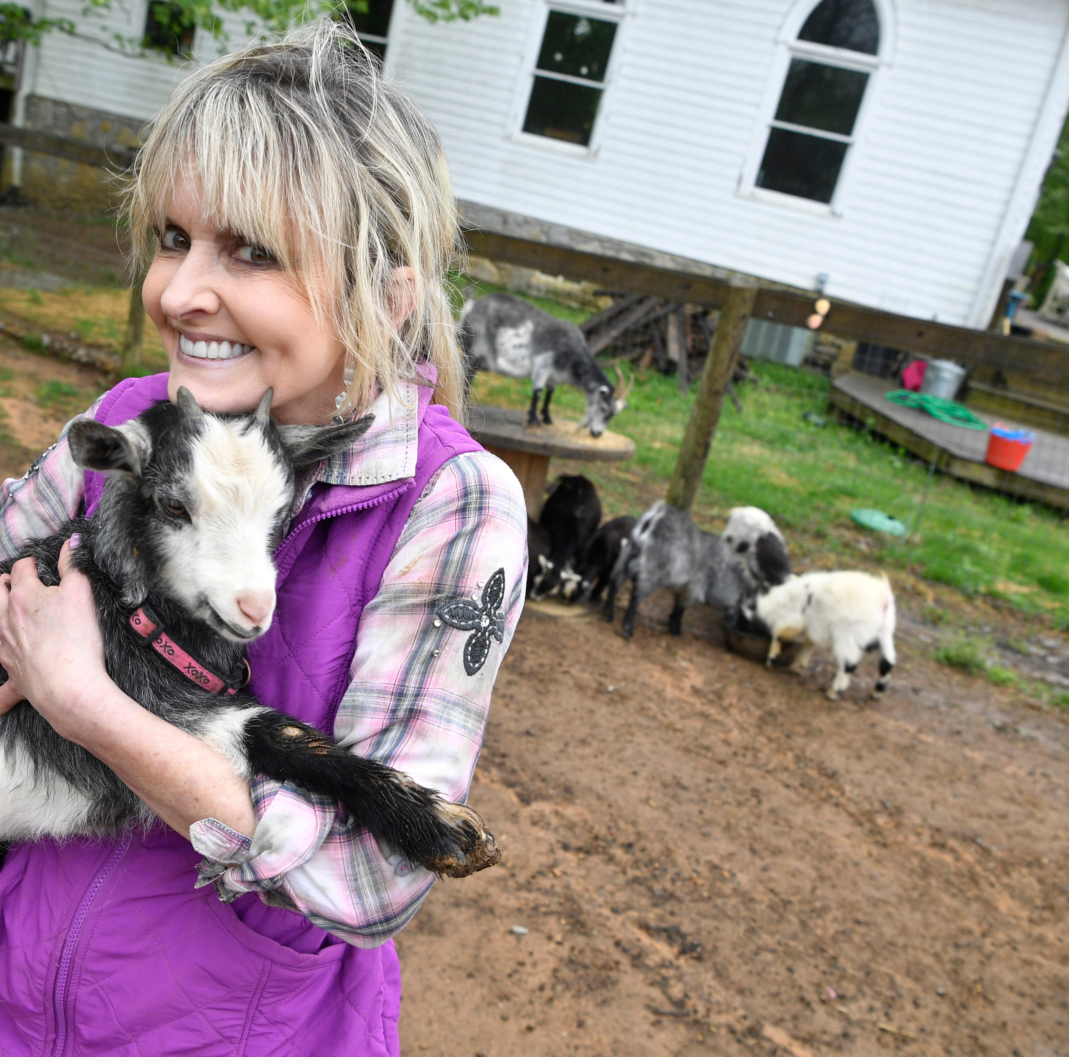 Bingo the Weather Goat launches two careers for Karlen Evins