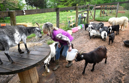 During feeding time, longtime Nashville broadcaster Karlen Evins interacts with the mini goats she is raising Friday, April 19, 2019, in Lebanon, Tenn.