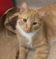 Bonzai is looking for a family that already has one or two furry cats for him to play with.
