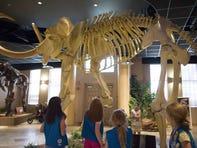 Arizona Museum of Natural History, 53 N. Macdonald, Mesa. https://arizonamuseumofnaturalhistory.org/