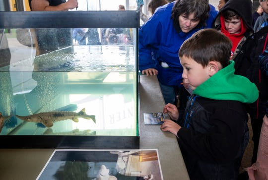 Kason Dubreuil-Garcia, 4, looks at a 1-year-old sturgeon on display at Earth Fair Friday, April 26, 2019 at  Goodells County Park. The sturgeon, which is on display by St. Clair-Detroit River Sturgeon for Tomorrow, will be released into the Black River this summer.