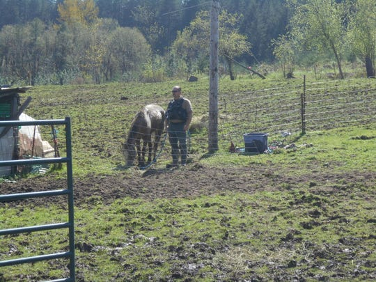 Sheriff's deputies in Linn County seized 34 horses from a residence outside Lebanon on Wednesday, and the owners are facing criminal animal neglect charges.