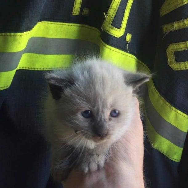 Kitten survives trek from Salinas to Sacramento stuck in car's engine compartment