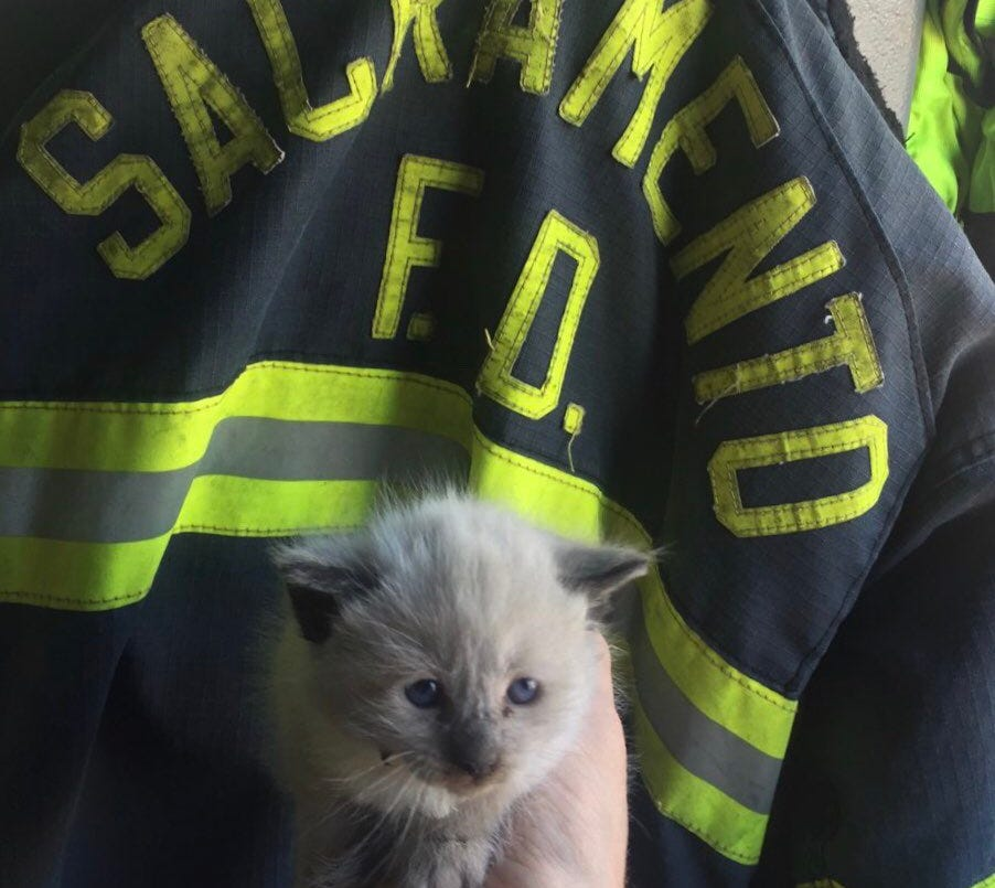"""Clutch"" was rescued this week by Sacramento firefighters after traveling from Salinas to Arden Fair mall stuck in an engine compartment."