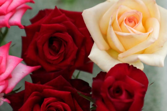 "The Tallahassee Area Rose Society presents ""Roses You Love…You Can Grow"" at their 35th annual rose show on Saturday, Oct. 26, and Sunday, Oct. 27."