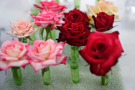 Professional and novice rose growers prep their most beautiful blooms to show off at the Thomasville Rose Show and Festival Friday, April 26, 2019.