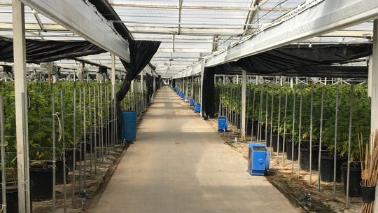 More than 35,000 cannabis plants were eradicated this week at this Carpinteria indoor growing operation, according to authorities.