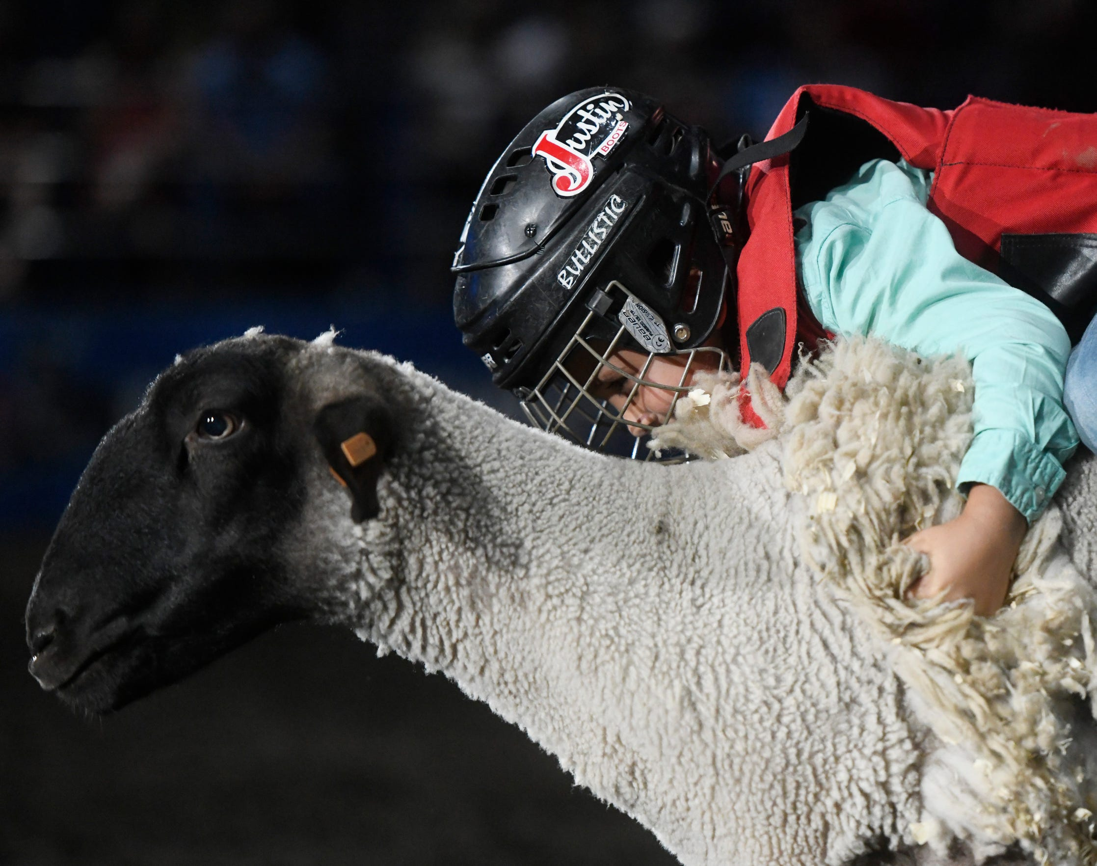 Colton Plimper holds onto a sheep during mutton bustin' at the Corpus Christi rodeo, Friday, April 26, 2019, at the American Bank Center. Plimper placed in first.