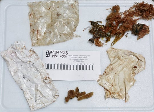 Scientists found this garbage in the stomach of a dolphin calf who stranded on Fort Myers Beach Tuesday.