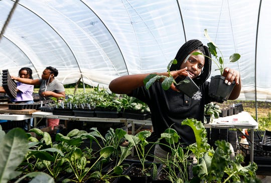 Tamia Coleman, 16, transfers potted plants on the Girls Inc. Youth Farm in Frayser. Girls harvest every Friday; for produce sold every Saturday at the Farmers Market.